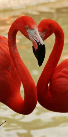 Red Flamingos photo credit: donated by Anna Pham (National Wildlife Federation) Pretty Birds, Beautiful Birds, Animals Beautiful, Cute Animals, Wild Animals, Beautiful Things, Exotic Birds, Colorful Birds, Exotic Animals