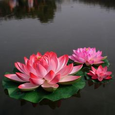 2019 29 CM Diameter Big Size Artificial Simulation Lotus Flower For Wedding Decoration Home Decor Pink Red Purple Orange White From Jackylucy 3 04 Lotus Flower Quote, Lotus Flower Wallpaper, Flower Quotes, Lotis Flower, Most Beautiful Flowers, Exotic Flowers, Love Flowers, Plant Crafts, Pink Lotus