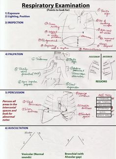 Respiratory examination - Wikipedia, the free encyclopedia Drawing Techniques, Drawing Tips, Drawing Reference, Horse Drawings, Animal Drawings, Lung Sounds, Illustration Inspiration, Horse Sketch, Horse Anatomy