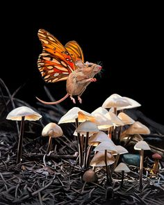 Hyperrealistic Depictions of a Fictional Mouse-Butterfly Species by Lisa Ericson  http://www.thisiscolossal.com/2015/03/lisa-ericson-butterfly-mice/