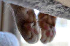 Cat Paws, Cats, Animals, Gatos, Animales, Animaux, Animal, Cat, Animais