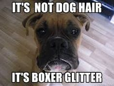Image result for boxer dog meme #boxerdog