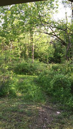 Back 40 trail 5/18/16