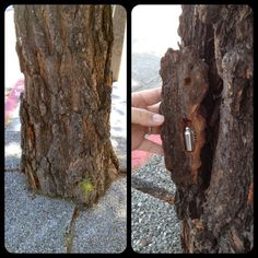 Tree Bark Cache, though you would need permission to do this if it isn't your tree. You might also want a good hint so people aren't pulling bark off trying to find the right piece. Secret Hiding Places, Hidden Places, Geocaching Containers, Swag Ideas, New Hobbies, Tree Bark, Puzzle Box, Hidden Storage, Shtf