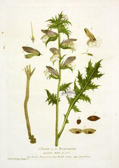 Regnault Antique Botanical Prints 1774-1780
