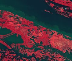The Amazon River in the heart of northern Brazil's rainforest. Vegetation has been colored with shades of pink — the darker the color, the denser the vegetation. l photo by  ESA's( European Space Agency)  Envistat Satellite