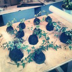 Nuova famiglia di B612 appena creata!!! In fase di asciugatura scocca e poi sono pronte per la vendita!!! B612: le piante che volano!!! #kokedama #b612 #coltivazione #moss #edera #green #vicolobancalegno #cloet #lab #laboratorio #bergamo #instagram #instamood #instagod #instagood #instabergamo #photo #interior #garden #come