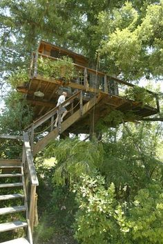 Staircase to a Napa Valley treehouse