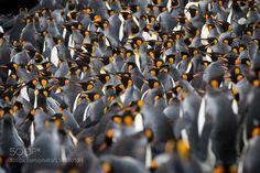 The Kings by JohnDickens #animals #animal #pet #pets #animales #animallovers #photooftheday #amazing #picoftheday