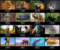 Myers-Briggs Personality Types Mapped to Animals