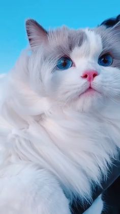 Cute Baby Dogs, Cute Cats And Kittens, Baby Cats, Kittens Cutest, Funny Animal Videos, Cute Funny Animals, Cute Baby Animals, Pretty Cats, Beautiful Cats