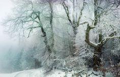 Beautiful winter trees
