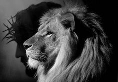 A commentary on how Aslan in Narnia reflects the Lion of Judah. Lion Head Tattoos, Lion Tattoo, Lion Pictures, Jesus Pictures, Animal Pictures, Lion Of Judah Jesus, Lion Profile, Lion And Lamb, Jesus Tattoo