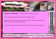 Customer Testimonial of EssentiallyPurrfect #mobile #Persian #cat #catgrooming service. Egle and Ondina, #Liverpool #Merseyside