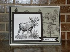 Stampin Along With Heidi: Walk In the Wild
