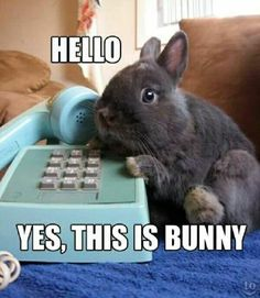 These Bunny Memes Are Soooo Cute It Will Make You Squee - World's largest collection of cat memes and other animals Funny Animal Memes, Cute Funny Animals, Cute Baby Animals, Funny Cute, Cat Memes, Funny Rabbit, Pet Rabbit, Cute Baby Bunnies, Funny Bunnies
