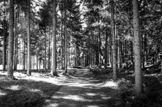Go your way,.... by Tom Klar on 500px