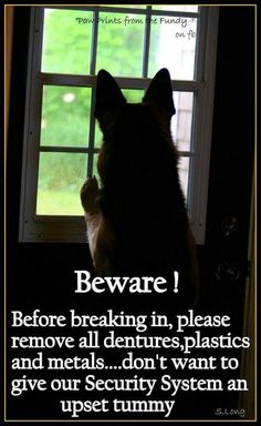 Please be considerate when breaking into this house! #dogs #funny #doglovers