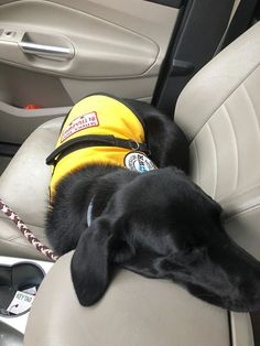 Baldwin napping on the way home from a long day. He knows he can only be on the chair when I say so.