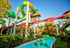 Image Result For Busch Gardens Camping Tampa