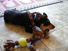 Dog Tug Toy by TammysTugs on Etsy, $11.99