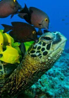 The Reef at the New England Aquarium  One New England Aquarium Simons IMAX Theatre Ticket