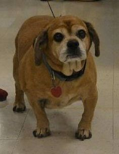 In Hawkinsville GA - PLEASE READ THEIR STORIES AND PLEASE HELP darling senior dogs in need ONCE AGAIN, heartless humans dump older dogs! Hope there is a rescue that can find room for these poor seniors! Please share them!!