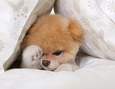 Boo, time to wake up...
