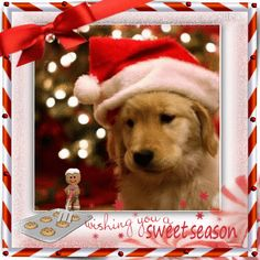 Wishes for a Sweet Christmas to all my friends~ Blingee by stina scott