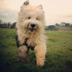 Oh! My human! I'm running really fast! Air tastes goooood!