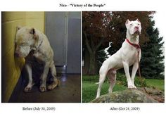 Before and after picture. Everyone has seen the first picture. It broke everyone's heart. Saving a dog's life works!