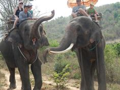 Elephant riding at the Hutsadin Elephant Sanctuary in Hua Hin, Thailand Stuff To Do, Things To Do, Elephant Ride, Elephant Sanctuary, Thailand, Fun, Animals, Things To Make, Animales