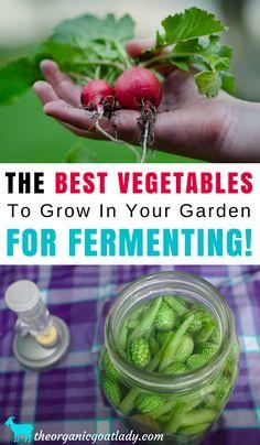 Gardening Tips Fermented Foods Vegetable Gardening For Beginners The Best Vegetables To Grow In Your Garden For Fermenting Probiotics Best Fermen Vegetable Garden Planner, Vegetable Garden For Beginners, Gardening For Beginners, Vegetable Gardening, Flower Gardening, Planting Vegetables, Organic Vegetables, Growing Vegetables, Veggies