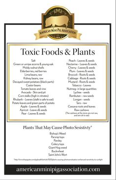 Mini Pig Toxic Plant/Food List