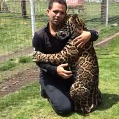 This video is for those who believe in the miracle of Love. Este video es para los que creen en el milagro del Amor. Vid by my brother Animals And Pets, Baby Animals, Cute Animals, Wild Animals, Beautiful Cats, Animals Beautiful, Mon Zoo, Black Jaguar White Tiger, Black Tigers