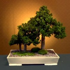 Please allow up to several weeks for delivery.Neither plastic nor silk, this preserved bonsai tree has real foliage and real wooden trunks that were carefully handcrafted and preserved to protect their natural fragrance, color and texture indefinitely. No watering, trimming or maintenance is required.  With its timeless beauty evoking a feeling of nature, this accent piece accommodates any architectural setting. Our one-of-a-kind preserved bonsai is planted in a traditional glazed imported…