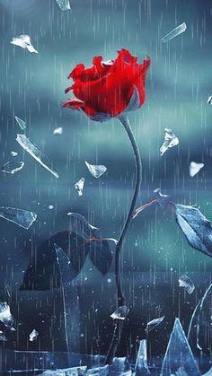 - Mondschein - in 2020 Beautiful Flowers Wallpapers, Beautiful Rose Flowers, Beautiful Nature Wallpaper, Beautiful Gif, Pretty Wallpapers, Blue Roses Wallpaper, Flower Phone Wallpaper, Heart Wallpaper, Abstract Iphone Wallpaper