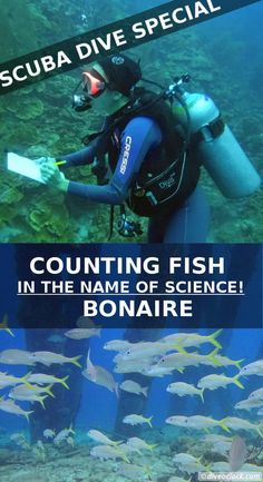 Counting fish in the name of science on Bonaire! There is an ongoing underwater monitoring project in the Dutch Caribbean which you can join. The only thing you need to do is count some fish! How cool!  http://www.diveoclock.com/destinations/Caribbean/Bonaire_MOO/ underwater | ocean | sea life | diving | coral reef |  dive the world | scuba diver | underwater photography | duiken | tauchen | under the sea  | macro | Caribbean | marine conservation | marine life | tropical coastal ecosystem