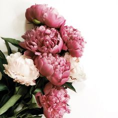 Peonies. Decoration. Chic Sommer Home