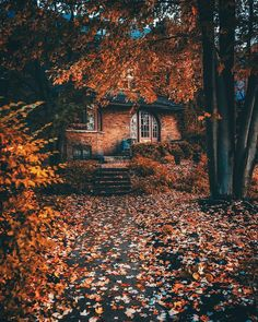 Pretty leaves The post Pretty leaves autumn scenery appeared first on Trendy. Autumn Scenery, Autumn Cozy, Autumn Feeling, Fall Wallpaper, Seasons Of The Year, All Nature, Autumn Nature, Autumn Photography, Autumn Aesthetic Photography