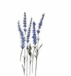 рисунок, цветок, лаванда