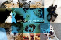 Totally over the Royal Baby? Look at these baby animals who are MUCH cuter!