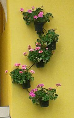 Jardin mexicano