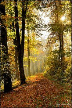 Path of Light – Langensoultzbach, Alsace, France Source by Landscape Photos, Landscape Photography, Nature Photography, Beautiful World, Beautiful Places, Beautiful Pictures, Forest Path, Autumn Scenes, Jolie Photo