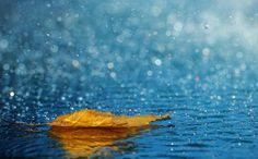25 Wonderful Photographs of Rain #photography #photo http://www.thephotoargus.com/25-wonderful-photographs-of-rain/