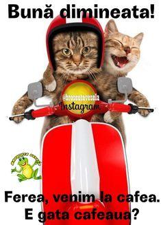 Animals And Pets, Emoji, Instagram, Pets, The Emoji, Emoticon