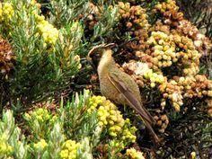 EJE CAFETERO - AVES DE CALDAS - BIRDS OF CALDAS -COLOMBIA: COLIBRÍES