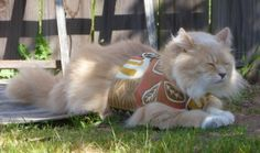 Pet Harness Jungle Size Medium SALE by ScotsPlace on Etsy, $12.00