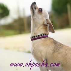 Histoire d'Amour ❤  Collier pour chien Taj Mahal avec bracelet coordonné pour le maître. 8 tailles disponibles du XXS au 3XL à partir de 35 €. Boutique en ligne : http://www.ohpacha.com/46-collier-pour-chien