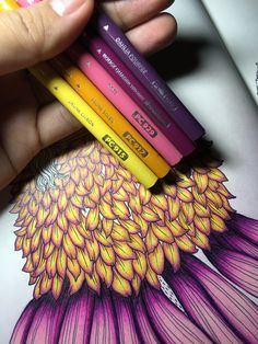 Rose Drawing Pencil, Realistic Flower Drawing, Beautiful Pencil Drawings, Simple Flower Drawing, Easy Flower Drawings, Pencil Drawings Of Flowers, Color Pencil Art, Colorful Drawings, Drawing Art